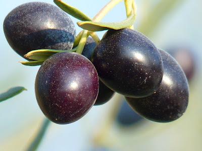 black olives benefits, black olives health benefits, black olives nutrition facts, black olives uses, health benefits,