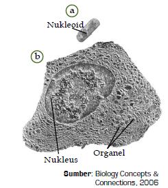 Pengertian Sel serta Perbedaan Bagian dan Struktur Sel Prokariotik dan Eukariotik