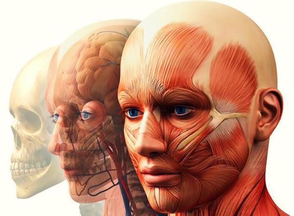 25 Libros de Anatomía para estudiantes