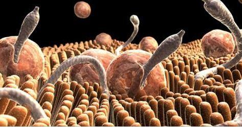 Действенный чай на травах: кишечные паразиты не успеют спохватиться