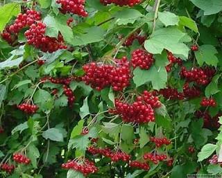 Beberapa manfaat buah-buahan