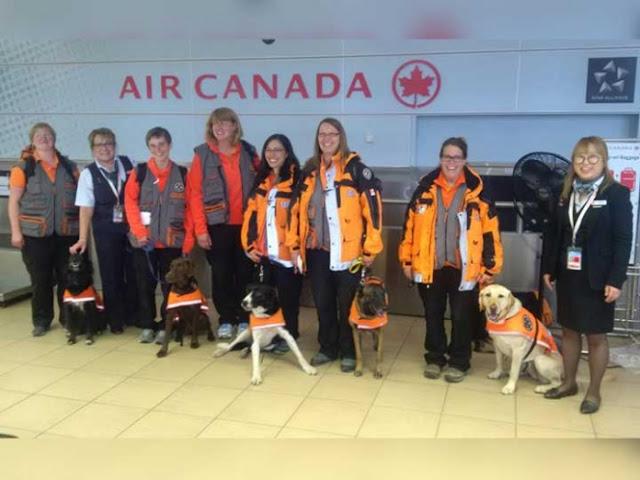 Perros canadienses se suman a búsqueda y rescate en CDMX (VIDEO)