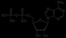 zila's world: Struktur AMP, ADP, ATP, NAD, NADP, NADPH