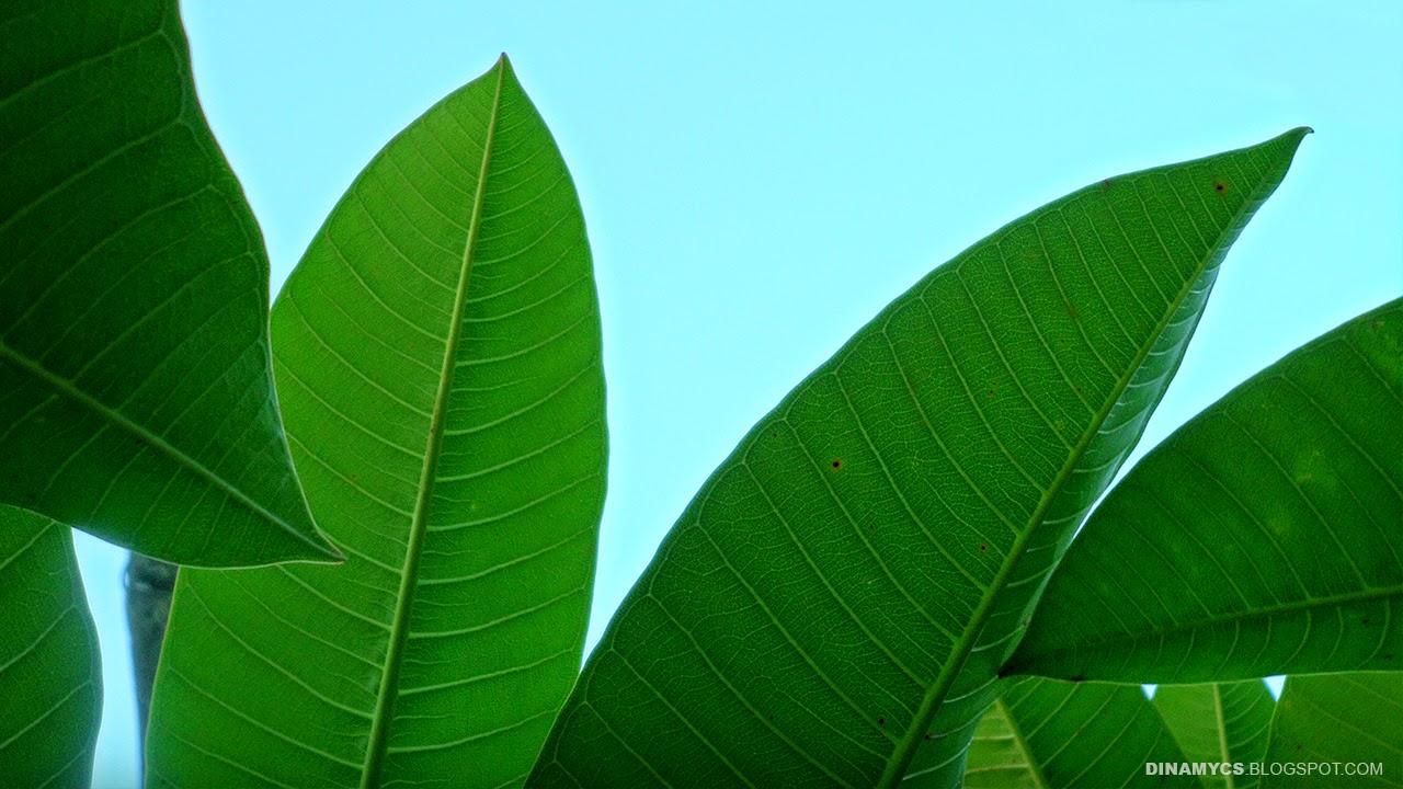Verdes fondos - Plantas de hojas verdes ...