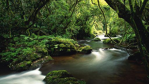 foto hutan