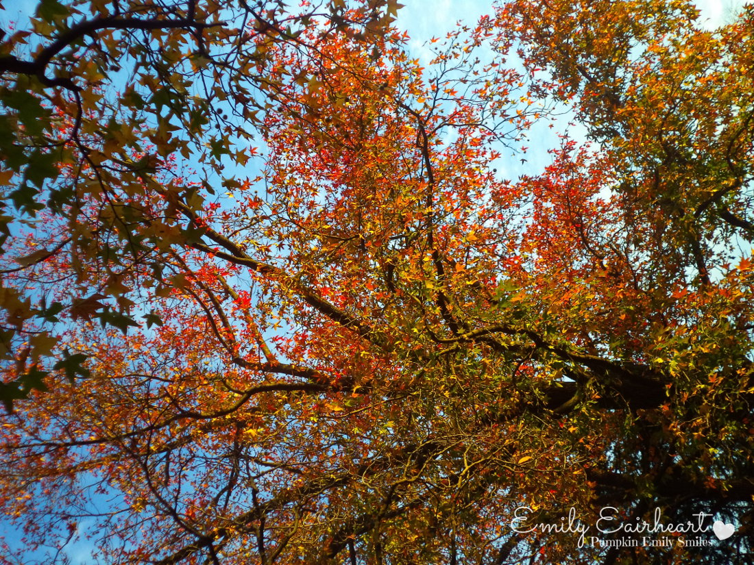 Red, green, yellow, and orange leaves on tree branches.