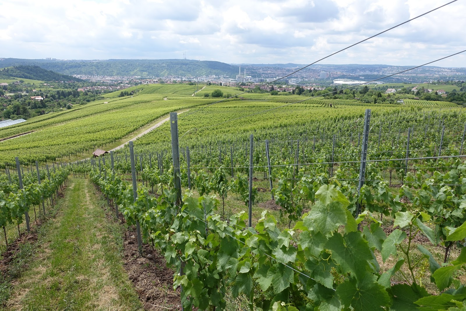 Cash Pool Fellbach Schiller Wine Vineyard Tour Cellar Tour And Tasting With Rainer