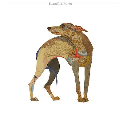 Collage de perro galgo