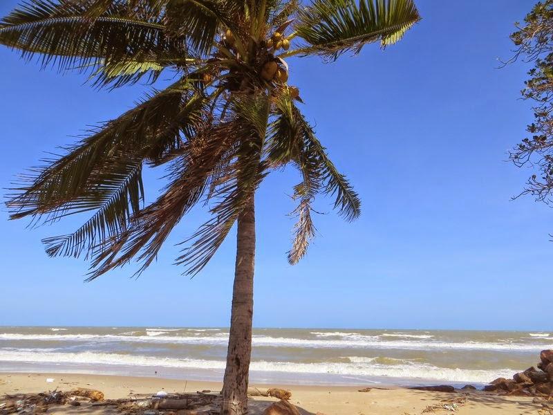 пальма кокосовая море