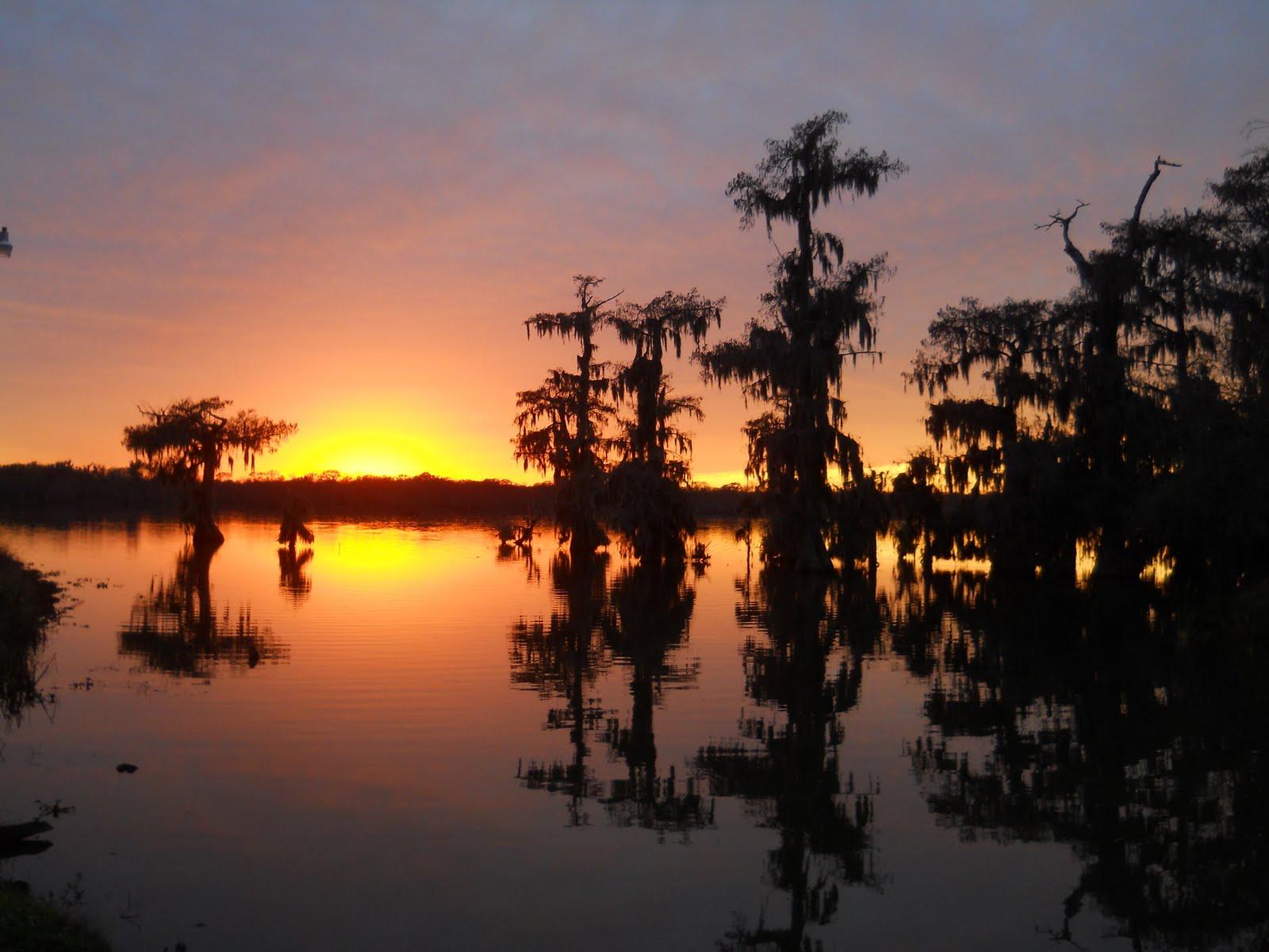 Louisiana Swamp Tours Louisiana Swamp Tours In Winter