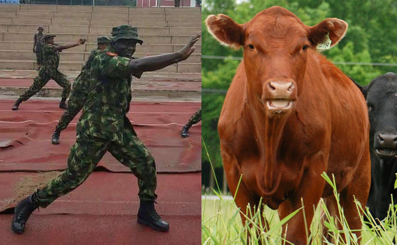 Really? Nigerian Army to setup cattle ranches in all states of the Federation