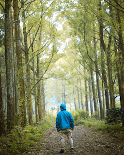 Perjalanan di Hutan Pinus menuju Budug Asu Wonosari Lawang Malang Singosari