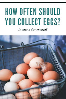 Farm fresh eggs collected daily. Is that enough?