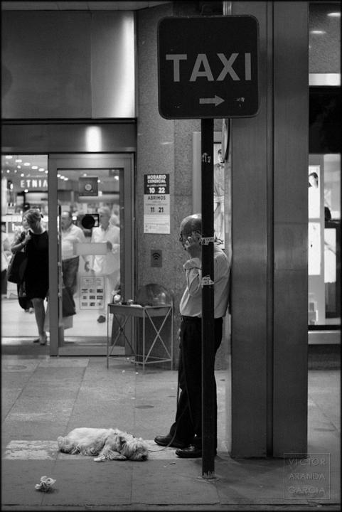 valencia,fotografia,perro,parada,telefono,taxi
