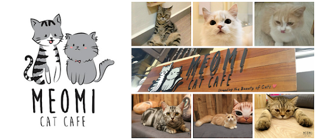 Meowmi Cat cafe logo and photo