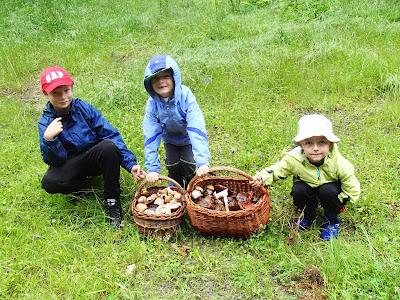 grzyby na Orawie, grzyby w lipcu, lipcowe grzybobranie, Wilgotnica czerniejąca Hygrocybe nigrescens, borowik ceglastopory Boletus luridoformis, muchomor czerwieniejący Amanita rubescens, muchomor czerwony Amanita muscaria, borowik szlachetny boletus edulis, Borowik górski Boletus subappendiculatus