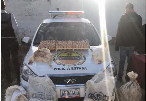 Cuatro policías de Carabobo fueron detenidos por robar huevos y gallinas de una granja