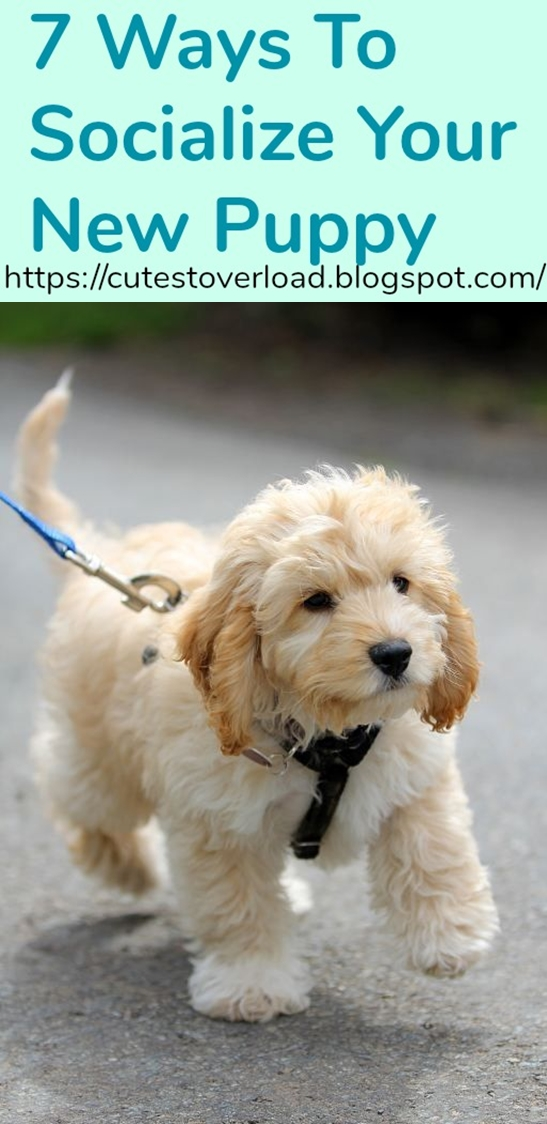 7 Ways To Socialize Your New Puppy
