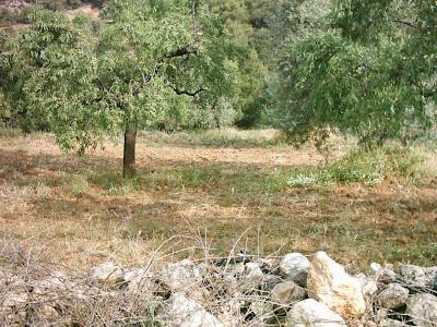 La pileta, camino, pantano de Pena, embalse, finca, almendros, olivos 26