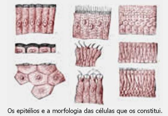 O Que Faz uma Célula Ligar-se Apenas a Células Semelhantes?