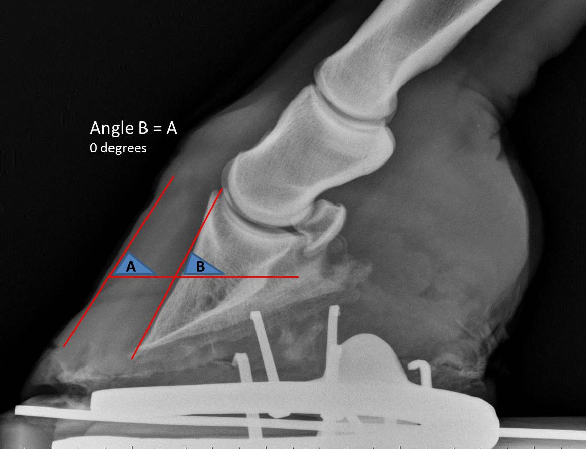 Trimming Horse Hooves Diagram 04 Ford Expedition Radio Wiring Michael Porter Equine Veterinarian Laminitis In A