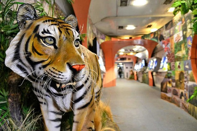 Tiger Express - The semi  luxury tourist train journey