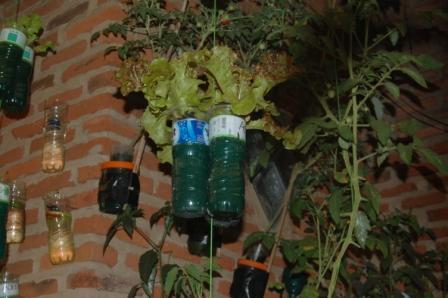 Beranda Pringsewu Tanaman Sayur menggunakan sistem hidroponik Sumbu