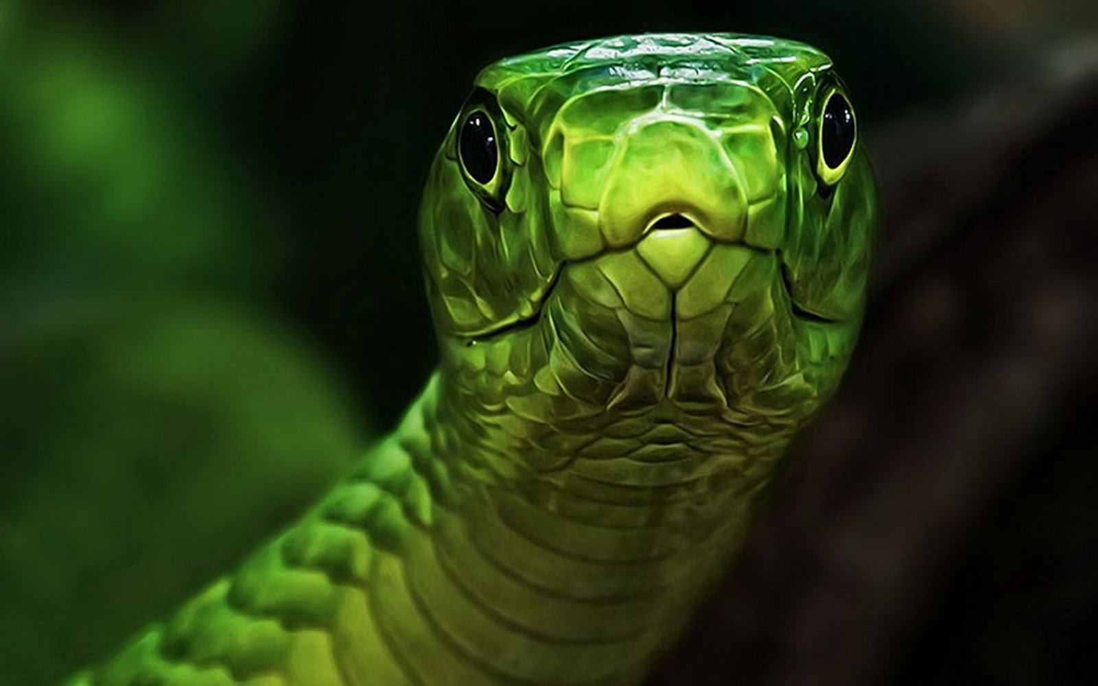 the snake wallpapers - photo #29