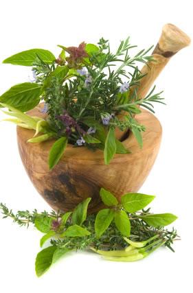 About the Herbal Survivalist - Herbal Survival