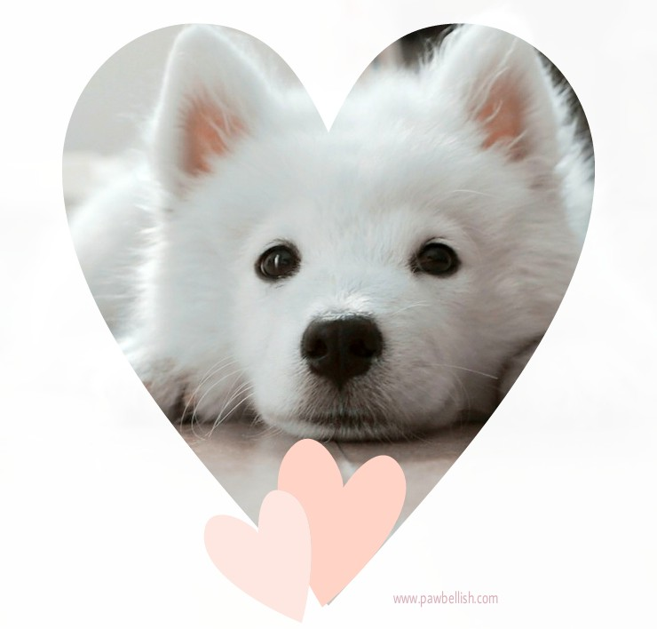 White puppy with heart frame and pink heart accent