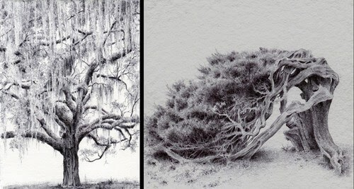 00-Dina-Brodsky-Tree-Drawings-www-designstack-co