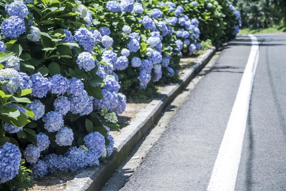 Tokyo vào tháng 6: Những điều tốt nhất để làm 2019