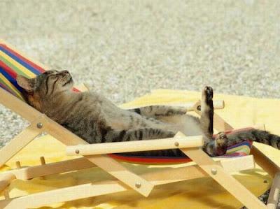 صور لحظات استجمام القطط