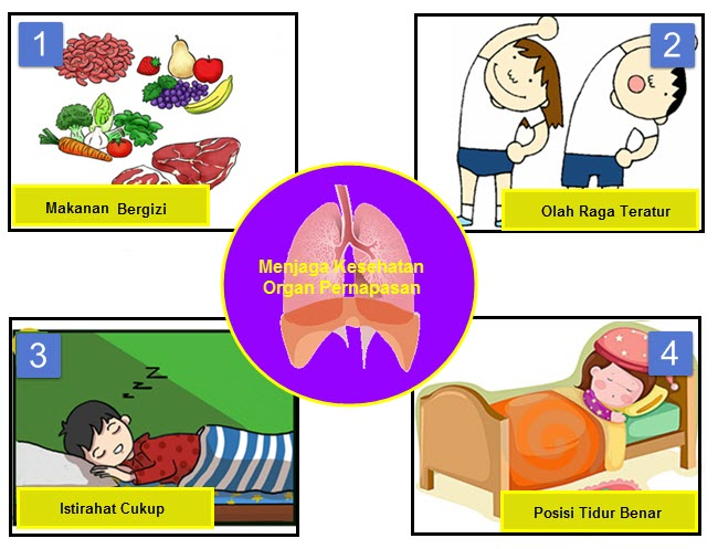 Menjaga kesehatan organ pernapasan