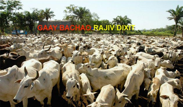 cow benefits in hindi