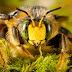 Οι μέλισσες μπορούν να καταλάβουν την προηγμένη μαθηματική έννοια του μηδενός