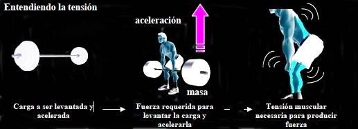 La importancia de mantener la tensión muscular para lograr la hipertrofia