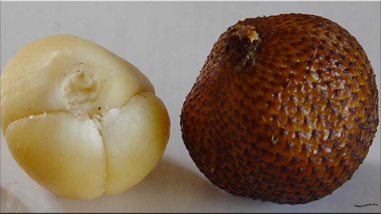 gambar buah salak, bahasa arab salak