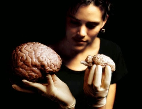 10% otak manusia hanya sebesar otak domba