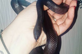 dreams about black snake meaning
