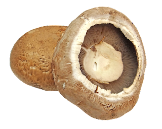 Benefits of portobello mushrooms that can fight cancer, inflammation etc.