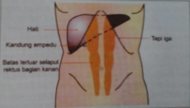 Anatomi Dan Fisiologi Hati