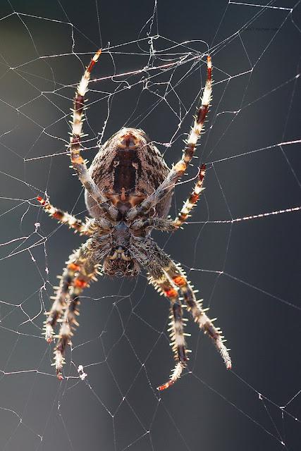Die Unterseite einer Spinne