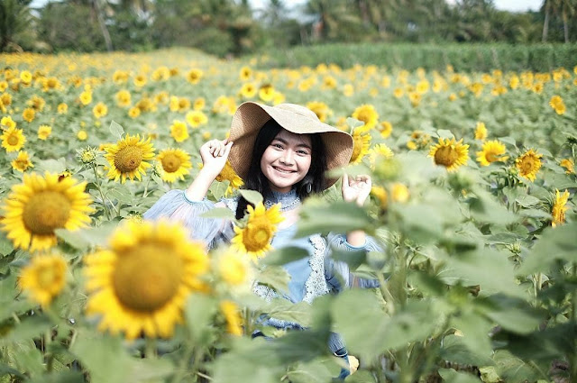 Spot Foto Instagenic kebun bunga matahari kediri