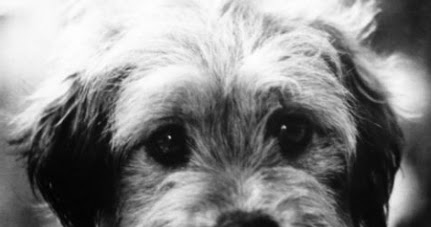 Famous Dogs In History Higgins From Shelter Dog To