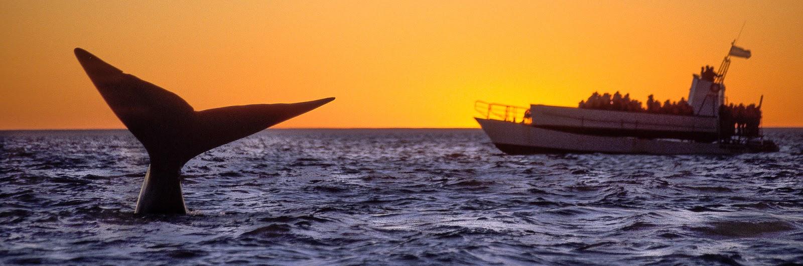 avistaje de ballena en Puerto Piramides Peninsula Valdes