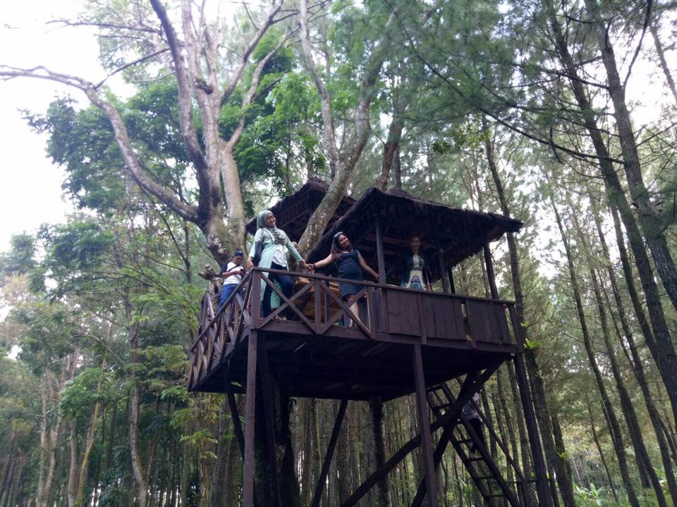 Wisata Hutan Pinus Banyuwangi