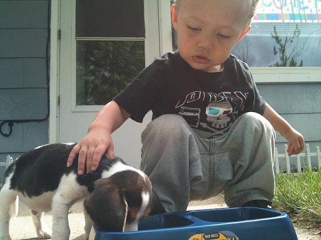 My son's first puppy