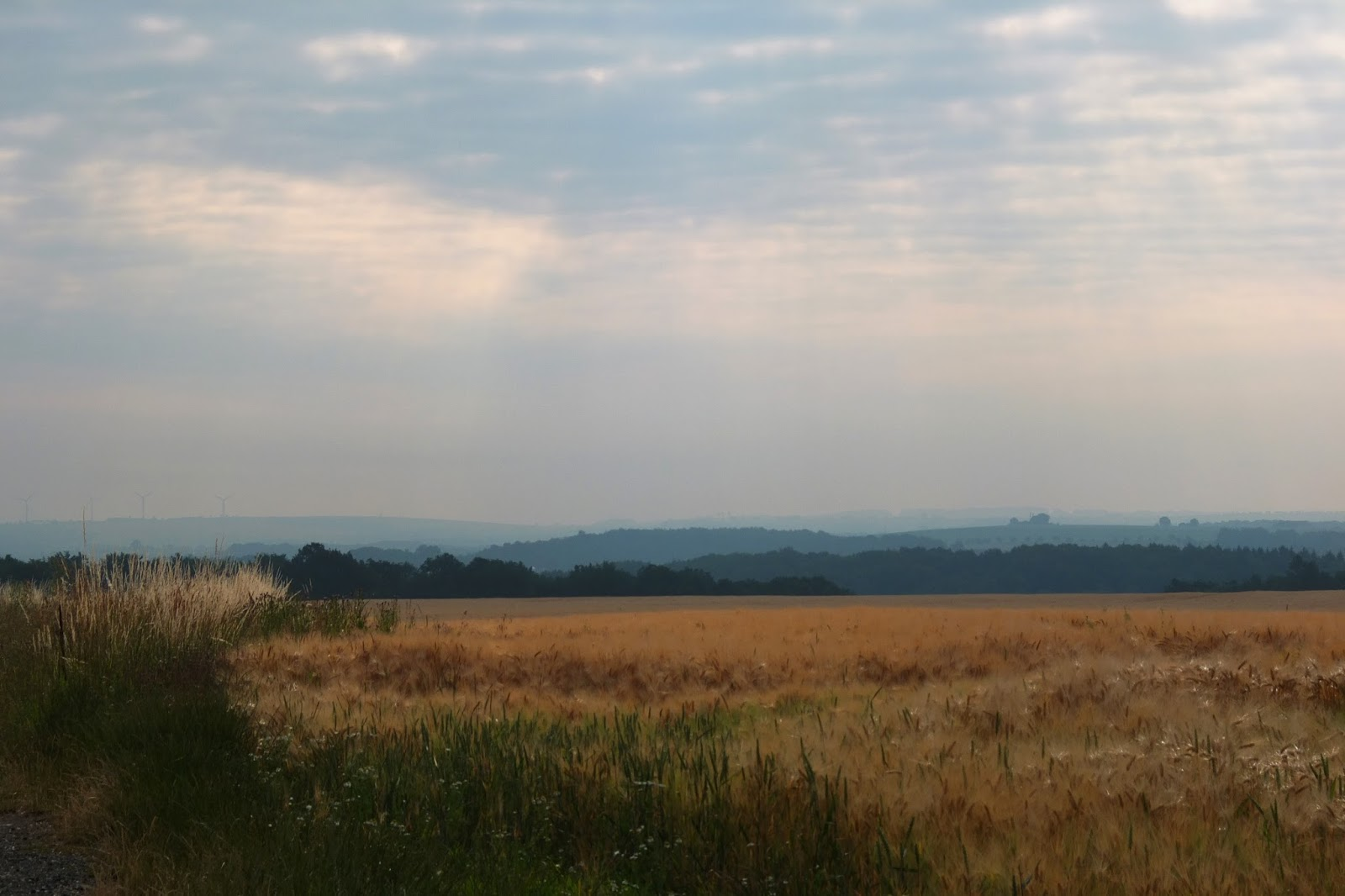 Golden fields with mountains in the distance somewhere in Germany.