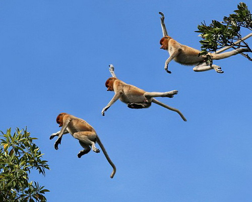Tinuku Travel Kahayan river cruise watch Borneo forests, orangutans, proboscis monkeys and traditional Dayak villages